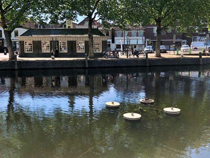 Het nest bevindt zich op één van de fonteinen in de Oude Haven.