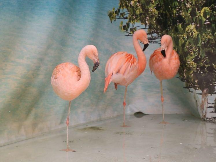 Ophef over flamingo's Kwik, Kwek en Kwak in Intratuin Utrecht