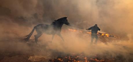 Californië kampt met 'duivelswind' die van één vonk een forse brand maakt