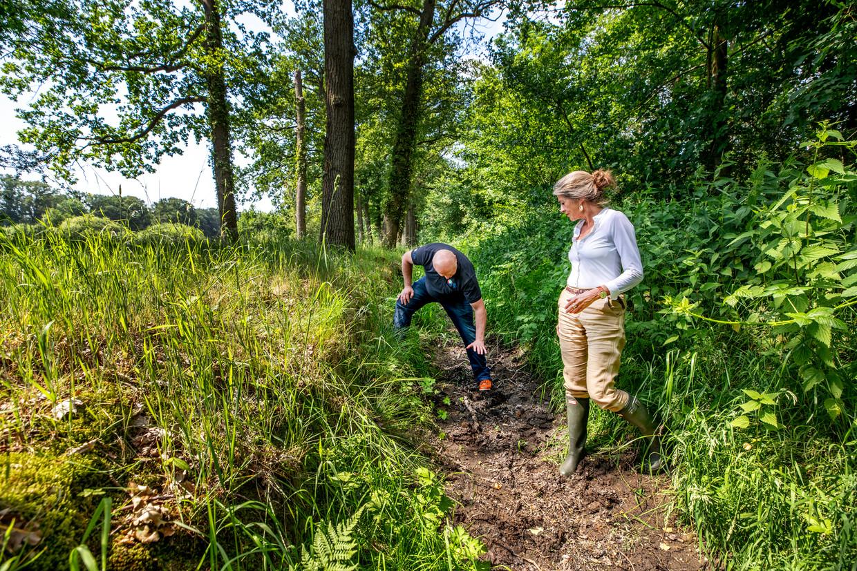 Op Landgoed Voorstonden laat de gebiedsbeheerder Dennis Dorman zien hoe hoog het water in de beek hoort te staan.  Beeld Raymond Rutting / de Volkskrant