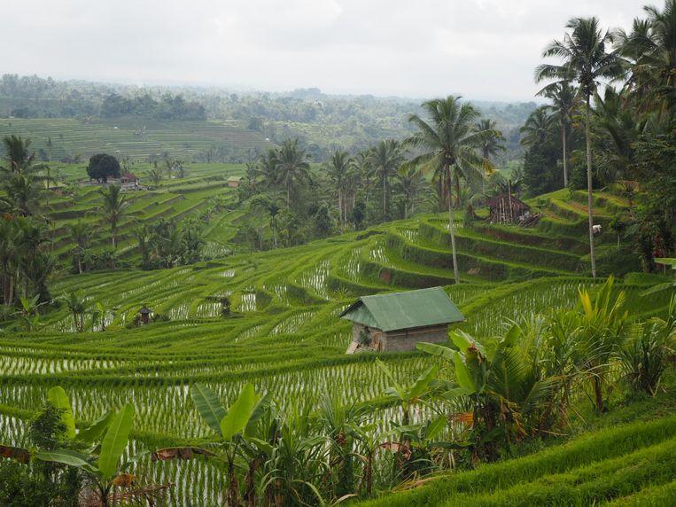 Jatiluwih rijstvelden.