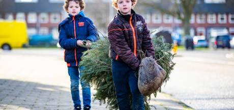 Dalfsen laat kinderen tóch kerstbomen voor een zakcentje inzamelen: 'We waren overbezorgd'