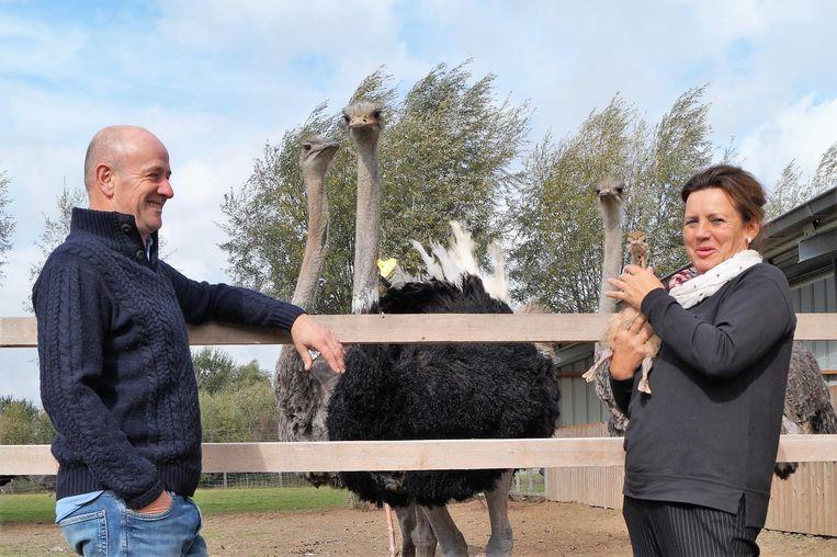 Terwijl Bert Neirinck en Christel Cauwelier poseren, kijken ook de struisvogels naar het vogeltje.