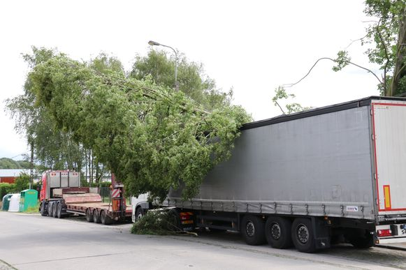 In de Kalkenstraat even verderop belandde een boom op een vrachtwagen en elektriciteitskabel
