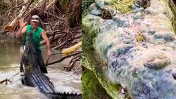 """Australiër weet enorme krokodil in bedwang te houden: """"Blijf, zit!"""""""