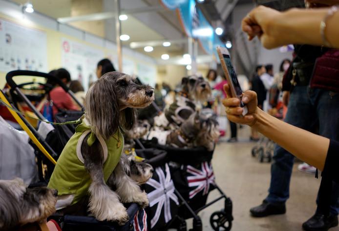 De hondenliefhebbers kunnen uit talloze verschillende hondenwagens kiezen. Eentje met de Union Jack er op bijvoorbeeld.