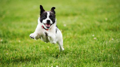 Loslopende hond of gewond wild dier? Ark van Pollare komt nu ook in Herne 'to the rescue'