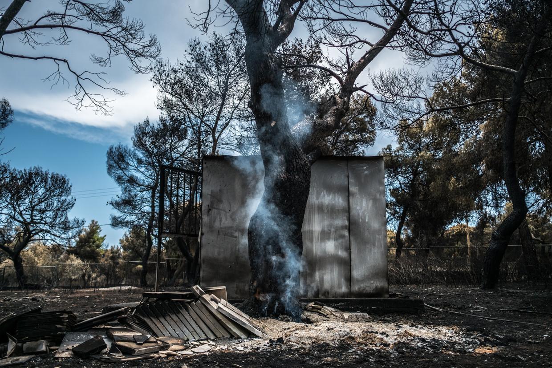 Een boom staat nog enigszins in brand.