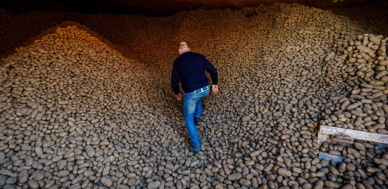 Aardappelboer Kees Trouw in een van zijn twee loodsen die gevuld zijn met aardappelen. Door de coronacrisis is de afzetmarkt stilgevallen en is het niet bekend of de aardappelen een bestemming krijgen. De kans is groot dat deze aardappelen vernietigd moeten worden. Beeld ANP