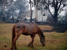 Incendies en Australie: de faibles pluies apportent un maigre répit