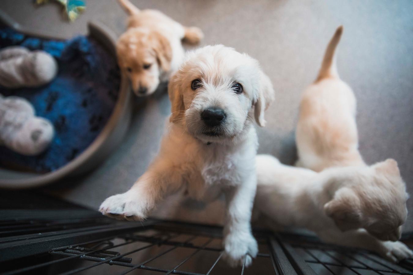 Het centrum is dringend op zoek naar pleeggezinnen, onder meer om puppy's op te vangen.