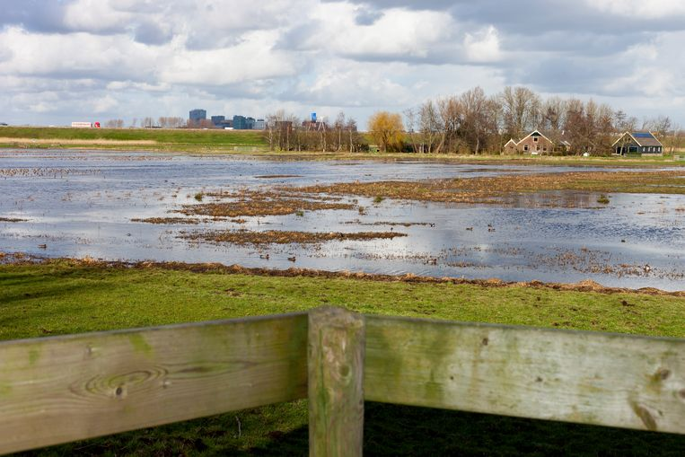 Het Landje van Geijsel, een bekende pleisterplaats voor weidevogels op trek naar noordelijker gelegen broedplaatsen. Beeld Renate Beense