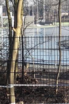 IJsbanen worden onder water gezet: 'Komt flinke vorstperiode aan'