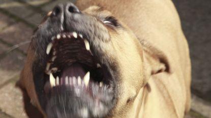 Vrouw (66) gedood door twee pitbulls in North Carolina