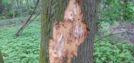 Vandalisme in Leijpark: drie bomen zwaar beschadigd