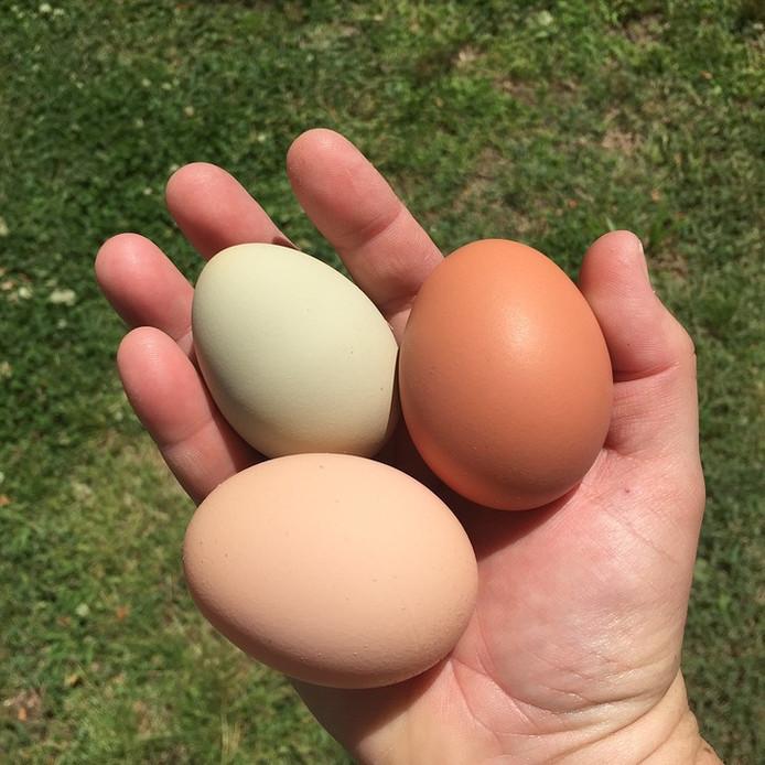 Een vrouw is beboet voor het stelen van eieren uit een kraam in Welsum.