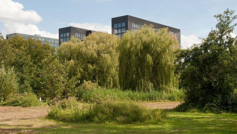 Bomen in het Siegerpark Beeld Ko Hage