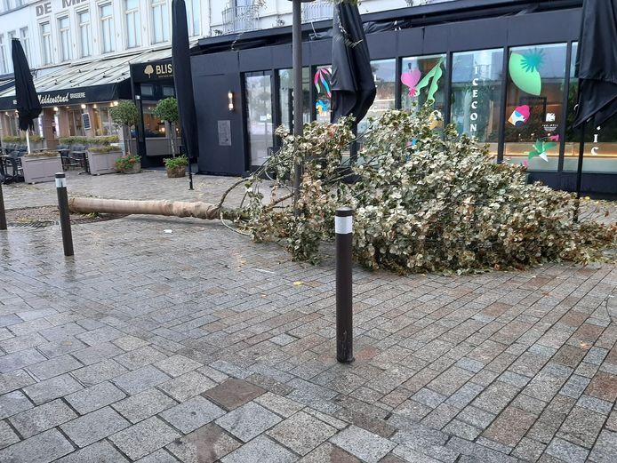 Op 't Zand in Brugge begaf een kleinere boom het onder de stormwind.