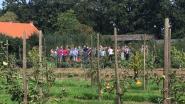 Rondleiding en demonstratie snoeien in Itegemse tuin