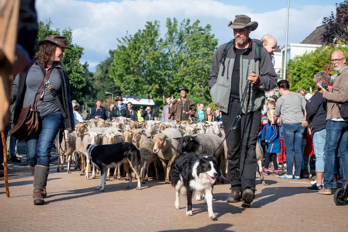 Samen met schaapherders dreven border collies de kudde.