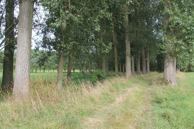 In dit bosje langs de Kindekensstraat werd de man teruggevonden.