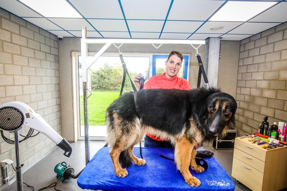 Brugge voorstelling nieuw dierenasiel: Demo hondenverzorging