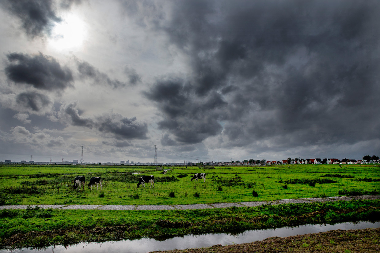 Een hogere waterstand moet polder IJdoorn aantrekkelijk maken voor vissen.