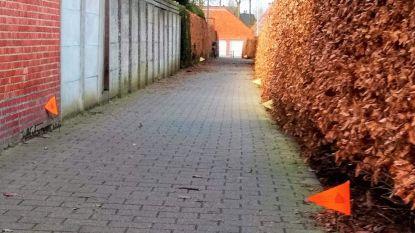 Gemeente is hondenpoep beu en plaatst vlaggetjes naast elke drol