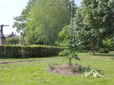 In Waalwijk kunnen ze maar niet van de Anne Frankboom afblijven; wat nu?