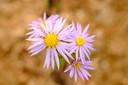 Laat planten die nog mooi bloeien niet overwoekerd geraken door andere die te explosief zijn gegroeid.