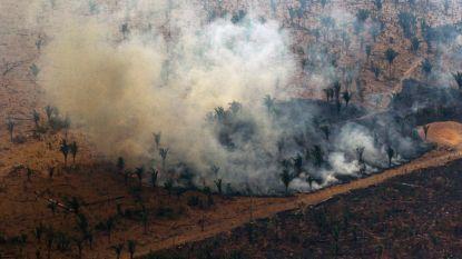 """Landbouwsector reageert: """"Vlees van bij ons draagt niét bij aan bosbranden in Amazone"""""""