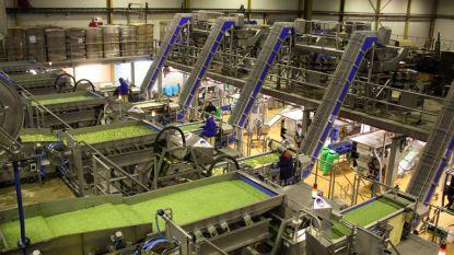 """422 banen in gevaar bij groentebedrijf Greenyard: """"Geen afdankingen in Sint-Katelijne-Waver"""""""
