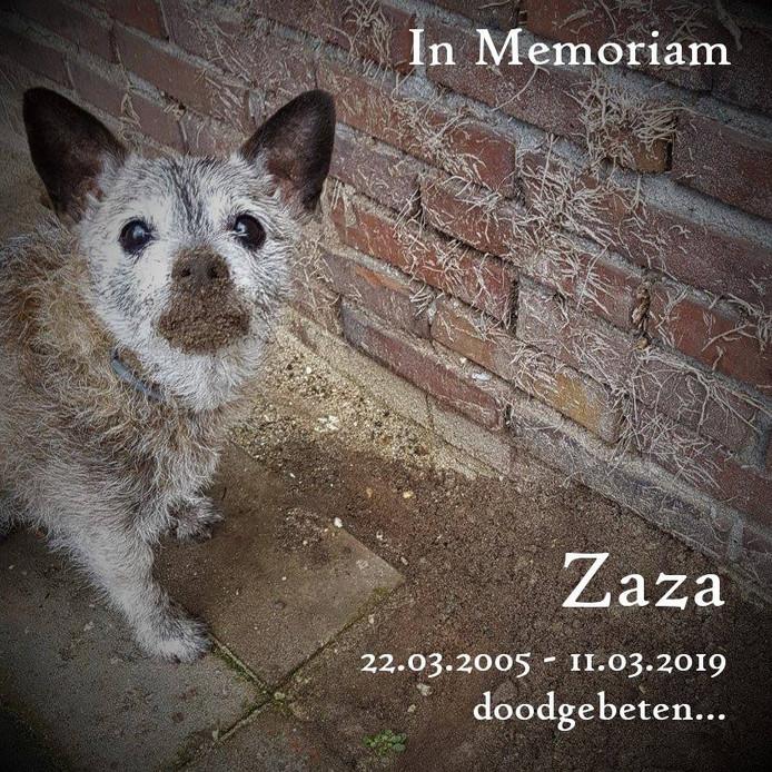 Rouwkaartje voor doodgebeten hondje Zaza.