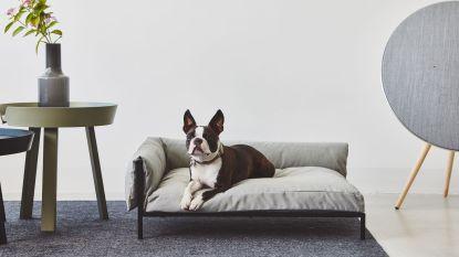 Werelddierendag: verwen je hond met een stijlvolle sofa of designkussen
