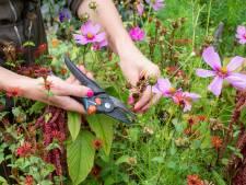 Geef je tuin een wellnesskuur: met deze tips help je planten er weer bovenop