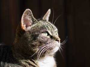 Le propriétaire du chat battu à mort à Huy condamné à une peine de travail