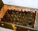 Roestende granaten die in 1999 door duikers van Defensie voor onderzoek uit de Oosterschelde werd opgedoken.