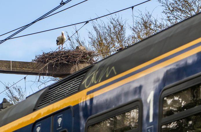 Ooievaars zoeken voor het maken van een nest soms wel heel opmerkelijke locaties uit: op de bovenleiding van het treinspoor in Bathmen.