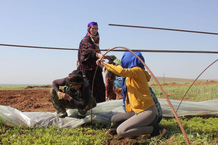 De vrouwen verbouwen zelf hun groenten en fruit in Jinwar.