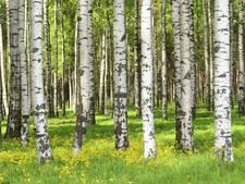 Vraag om bomenplan voor Meierijstad