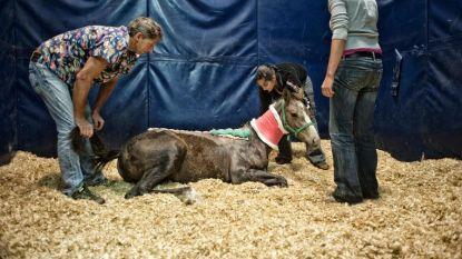 Doorbraak in onderzoek naar Limburgse paardenbeul? Politie is op zoek naar deze man