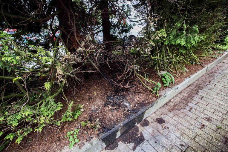 In augustus werd brand gesticht aan een boom. Er werd gebruik gemaakt van brandversnellers, wat te zien is aan de boordsteen.