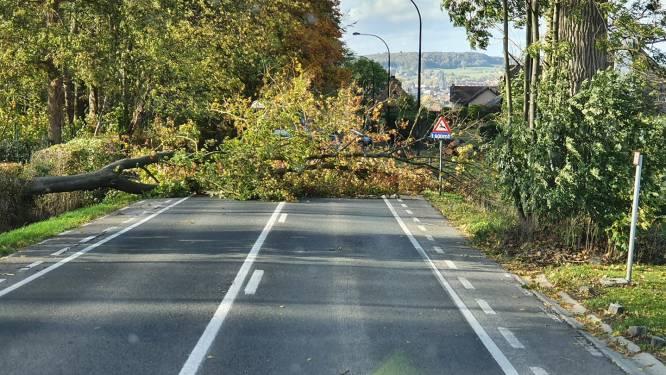 """Elzeelsesteenweg in Ronse versperd door omgevallen boom: """"Opruiming kan paar uur duren"""""""