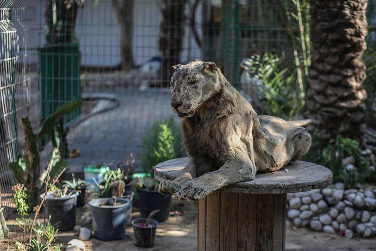 De opgezette leeuw aan de ingang van de zoo.