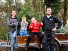 Zoeken naar kerstboom in Hapert: wanneer is de boom perfect?