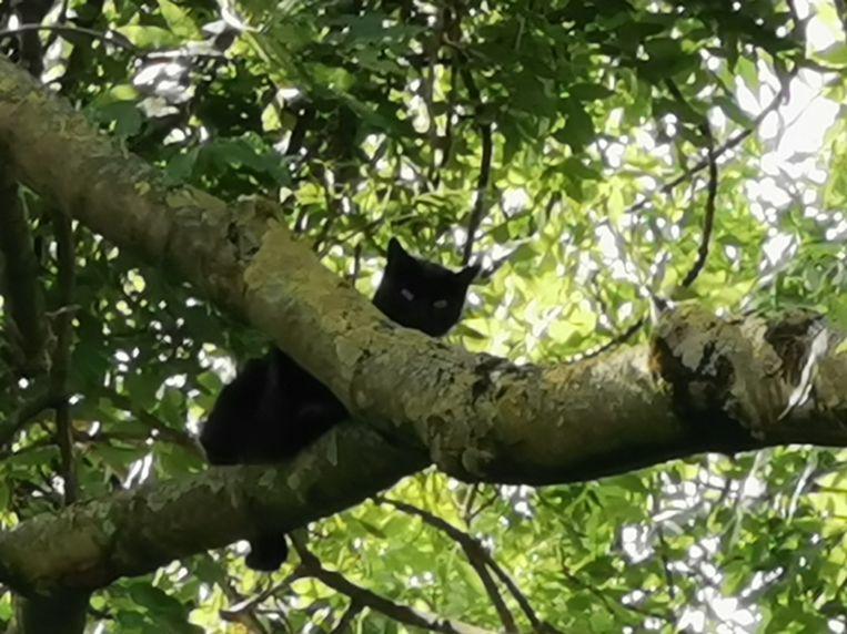 Kat in boom Vilvoorde Bavalei