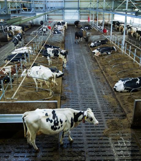 Stop met boeren onterecht neer te zetten als dierenmishandelaars