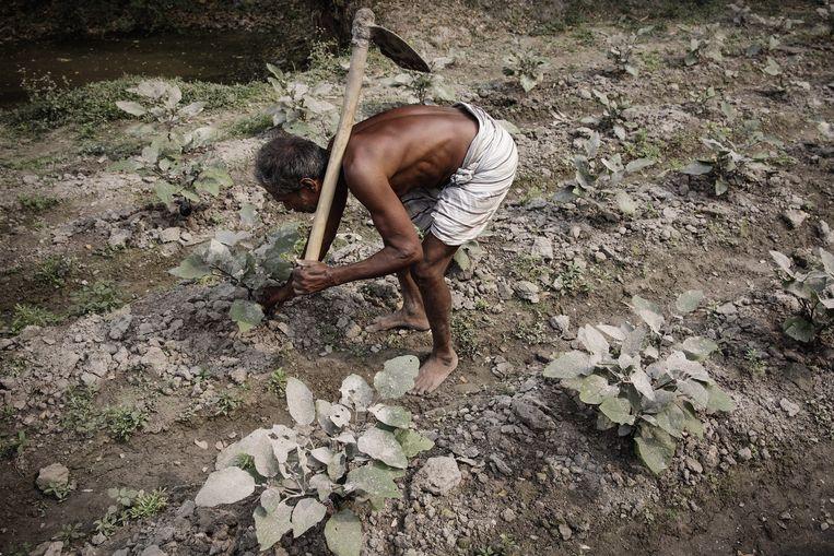 Een gentechgewassen kwekende boer bij Joydebpur. Beeld Daniel Rosenthal