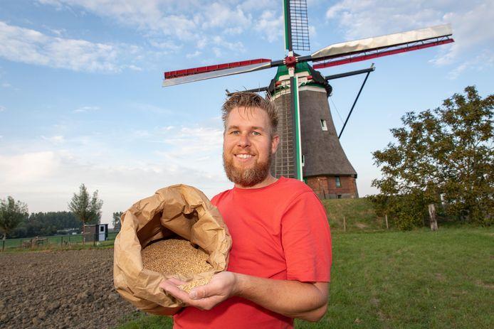 Peter Simpelaar van Zeeuwse Vlegel bij molen de Blazekop bij Ovezande toont de pareltarwe.