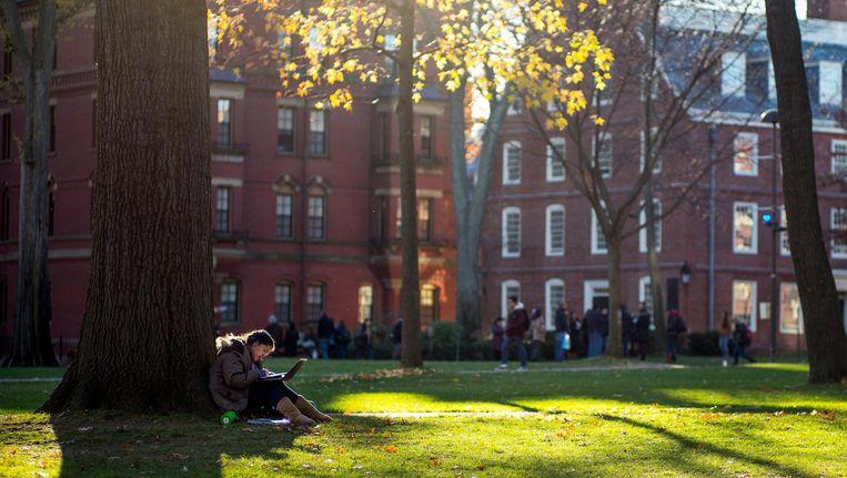 Een student aan het werk op de campus van Harvard. Beeld epa